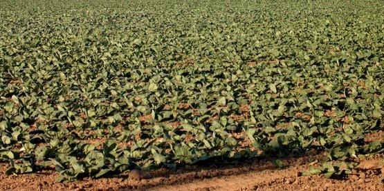 Field crops, Yates County NY