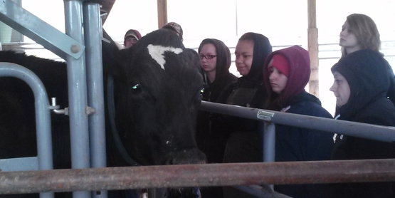 Farm Animal Safety and Management Training