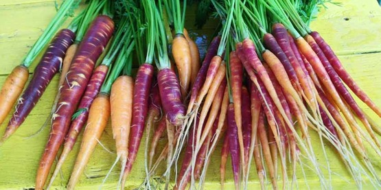 rainbow carrots, from Roots & Wisdom (Schenectady County) Facebook page