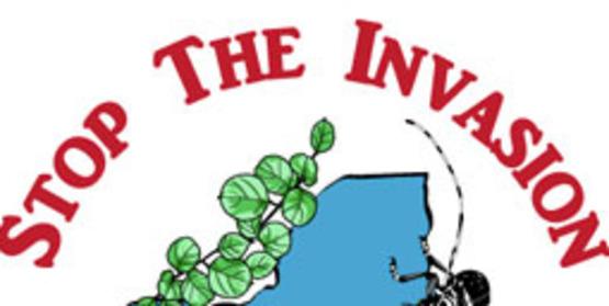 Training for Blockbuster Volunteers - Invasive Plants Survey