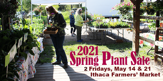 Shoppers at 2020 Spring Plant sale, with text 2021 Plant Sale, 2 Fridays May 14 & 21 at Ithaca Farmers' Market
