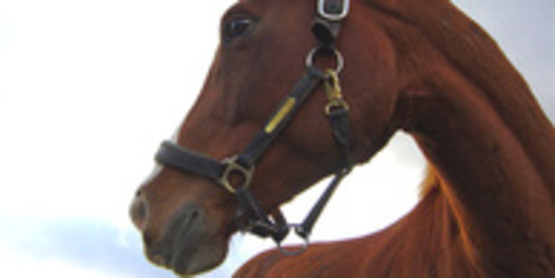 4-H Horse Clinic and Riding Level Evaluations