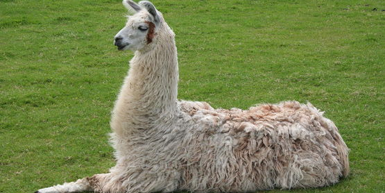 Llama Management Workshop