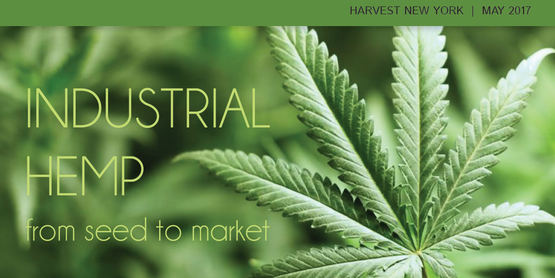 Cornell recently compiled resources on all aspects of industrial hemp culture in NYS