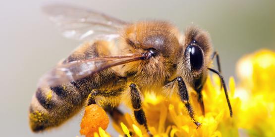Beekeeping Program
