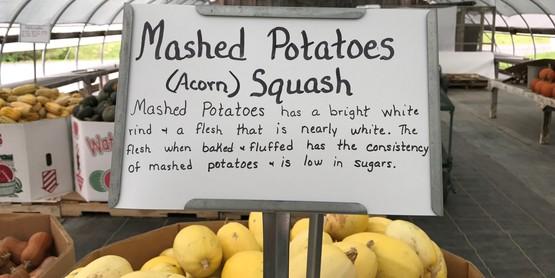 Farm to School, white squash at Cassims Farm
