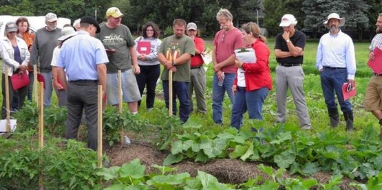 FRESH MARKET VEGETABLE FIELD DAY Early Pest Management Options