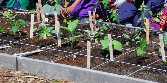Seed to Salad Children's program