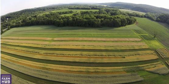 Drone grain trials