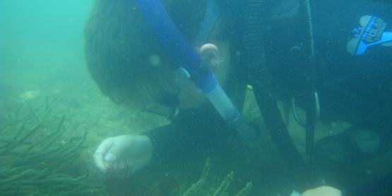 Christian Tettelbach conducting scallop population surveys