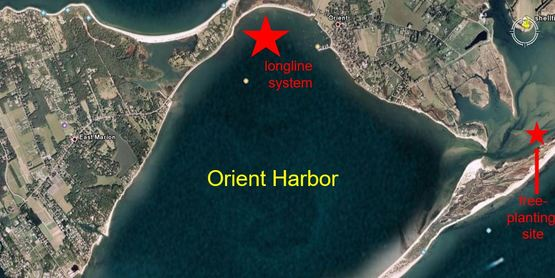 Orient Harbor, NY. Large star is the site of our primary spawner sanctuary longline system