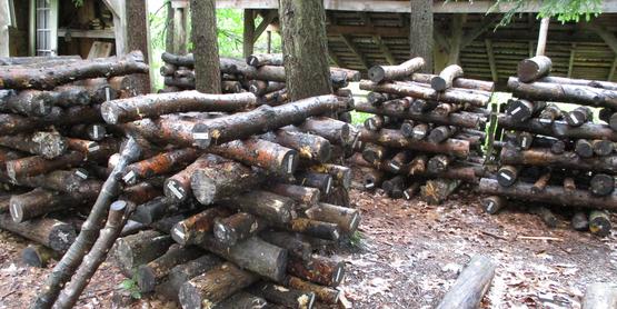 shiitake logs at Hawk Meadow Farm