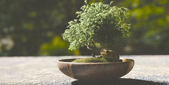 Tabletop Gardens: Bonsai & Terrariums