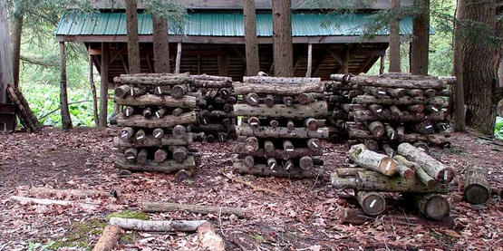 shiitake logs at Hawk Meadow Farm, Trumansburg