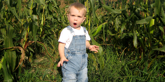 child in corn field