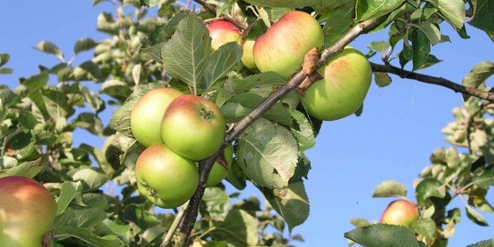 Apple Producers Meeting and Discussion - USDA RMA Insurance Policy Changes