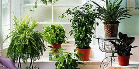 Growing Houseplants Successfully