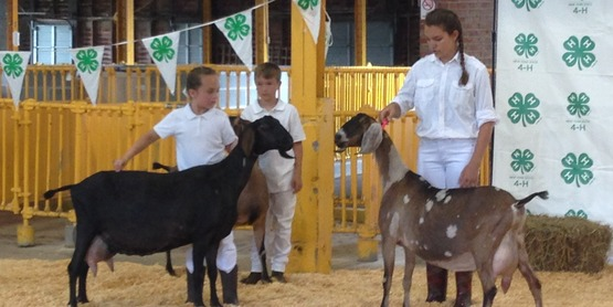 Goat show at 2018 youth fair