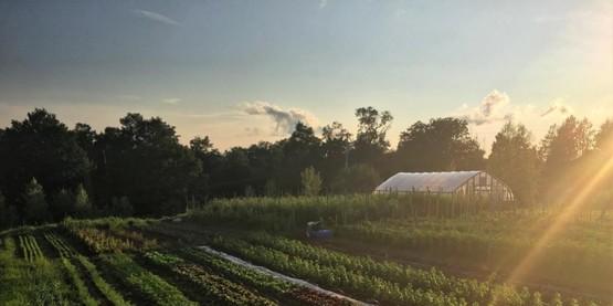 Vegetable Integrated Pest Management