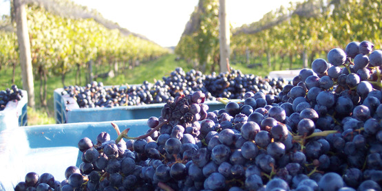 Vineyard & Winery Establishment Workshop
