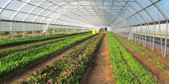 Extending the Growing Season with High- Tunnels