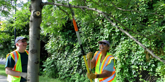 Tree Pruning, Architecture & Longevity: A Practical Approach