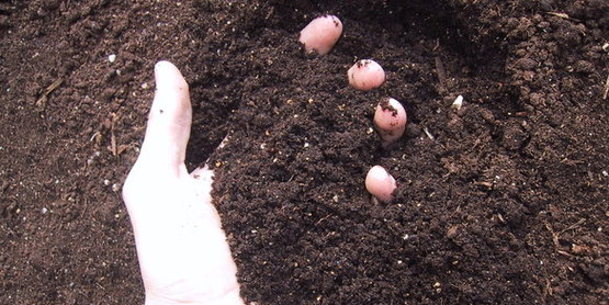 Soil is a key ingredient to successful gardening