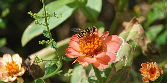 BIRDS, BEES AND BEAUTIFUL NATIVE PLANTS