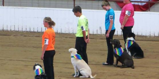 4-H Dog Obedience classes