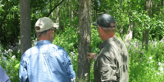 Assessing forest issues