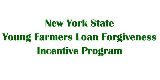 Check out this exciting loan forgiveness program for recent graduates!