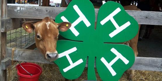 4-H Dairy Bowl Registration Due