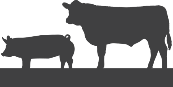 4-H Meet the Meat Side of Your Project