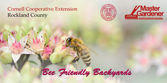 Bee Friendly Backyards