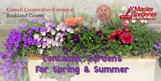 Container Gardens for Spring & Summer