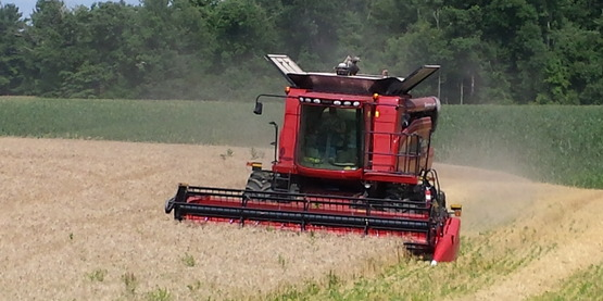 winter wheat being harvested in Columbia County.