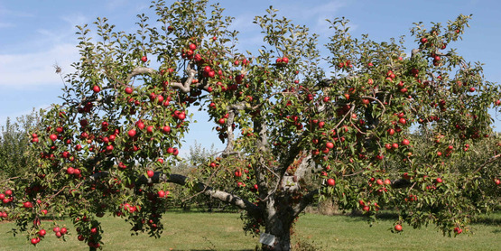 Learn to grow your own apples, cherries & plums at this class on 4/25/18.
