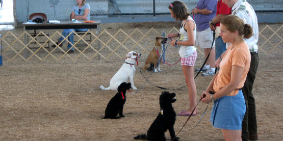 4-H Dog Obedience