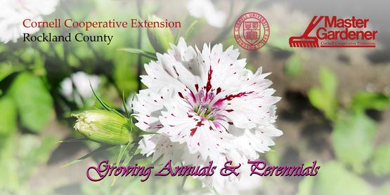 Growing Annuals & Perennials