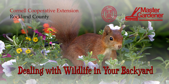 Dealing with Wildlife in Your Backyard