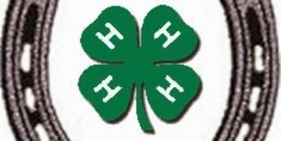 4-H Horse Communications