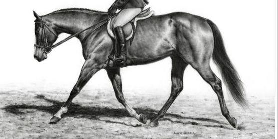 4-H Horse Judging Practice