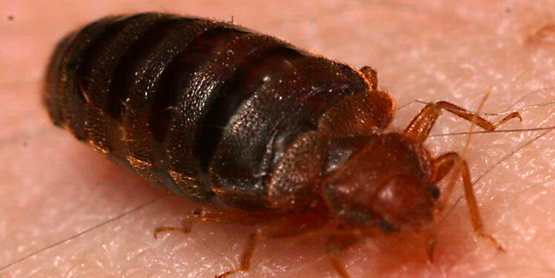 How to Avoid Getting and Spreading Bed Bugs