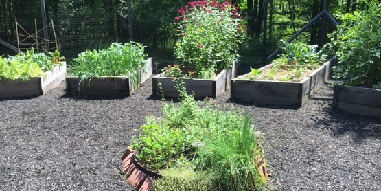 Intro to Permaculture & Ecological Design