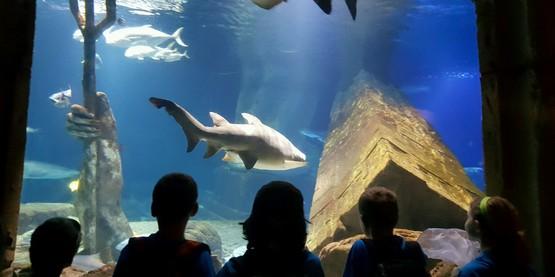 Field trip to the Riverhead Aquarium