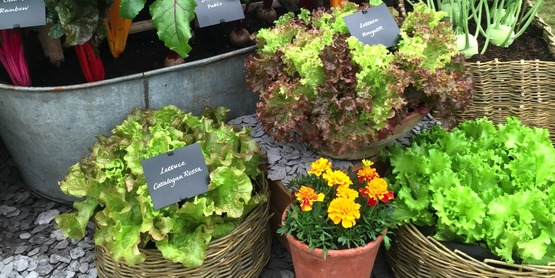Come learn about container gardening on June 14th!