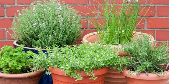 Presentation: Growing Herbs