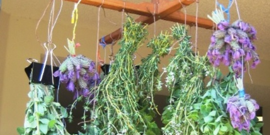A revolutionary way to look at your herb garden!