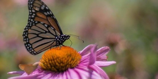 Presentation: Plant Natives and Give B's (Birds, Bees and Butterflies)  a Chance