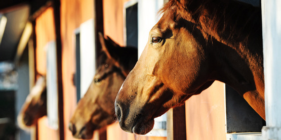 Equine Discussion Group